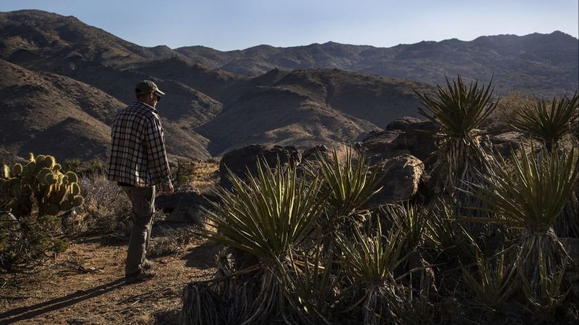 A volunteer rescuer walks through Joshua Tree National Park in April 2018. (Gina Ferazzi / Los Angeles Times)