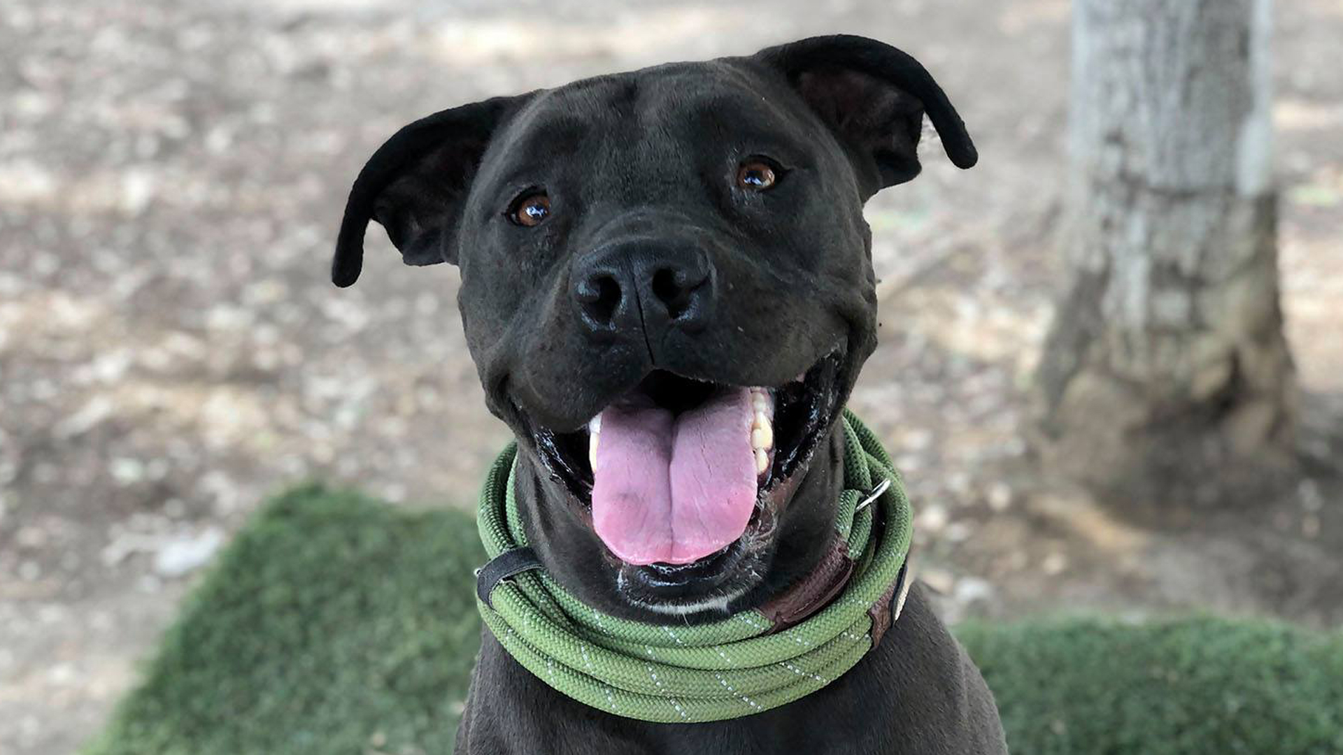 3-year-old Luna at the North Central Center on Nov. 22, 2019. (Credit: LA Animal Services)