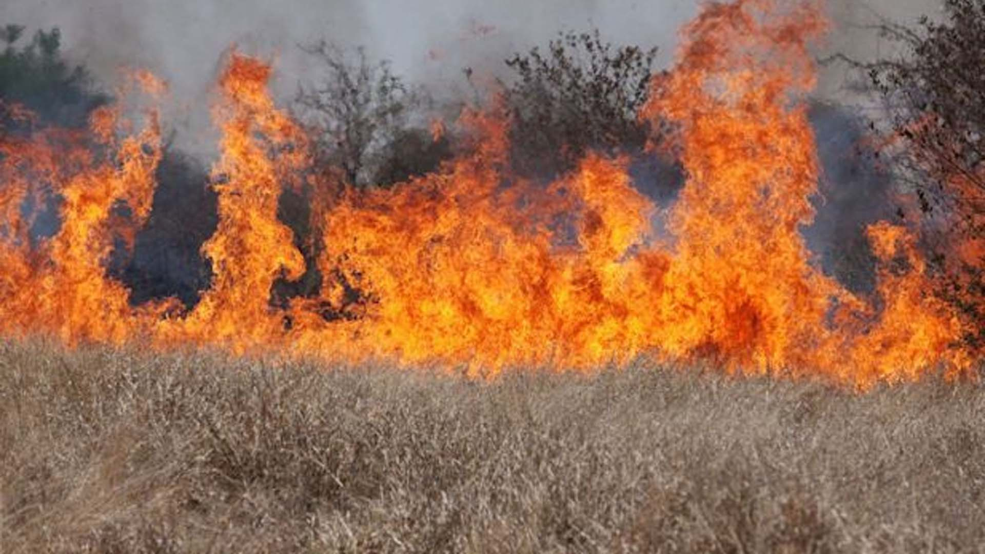 A wildfire fueled by invasive cheatgrass burns fragile sage steppe habitat in this undated photo. (Credit: USDA/NRCS)