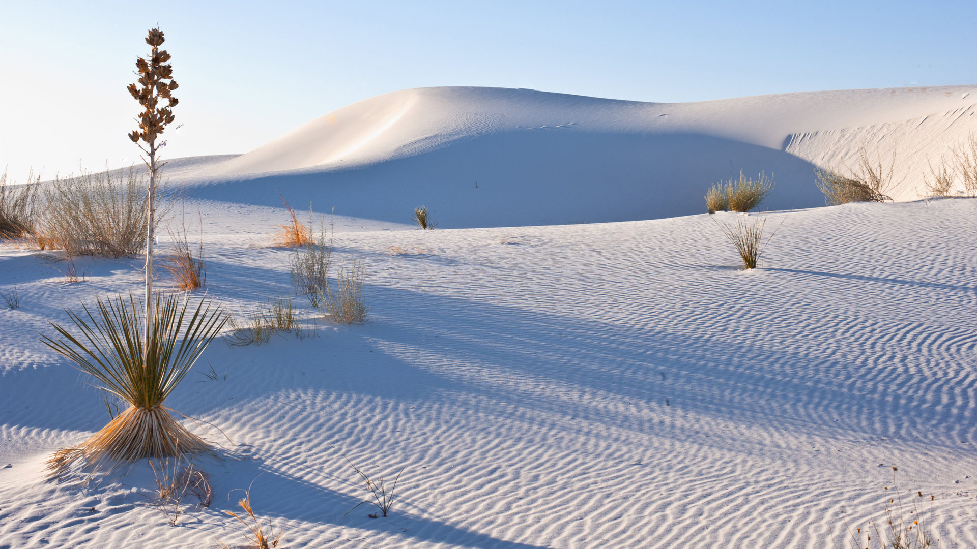 New Mexico, Las cruces, Heart of the Sands, Transverse Dunes and Yucca Plants, White Sands National Monument. (Credit: Universal Images Group via Getty Images)