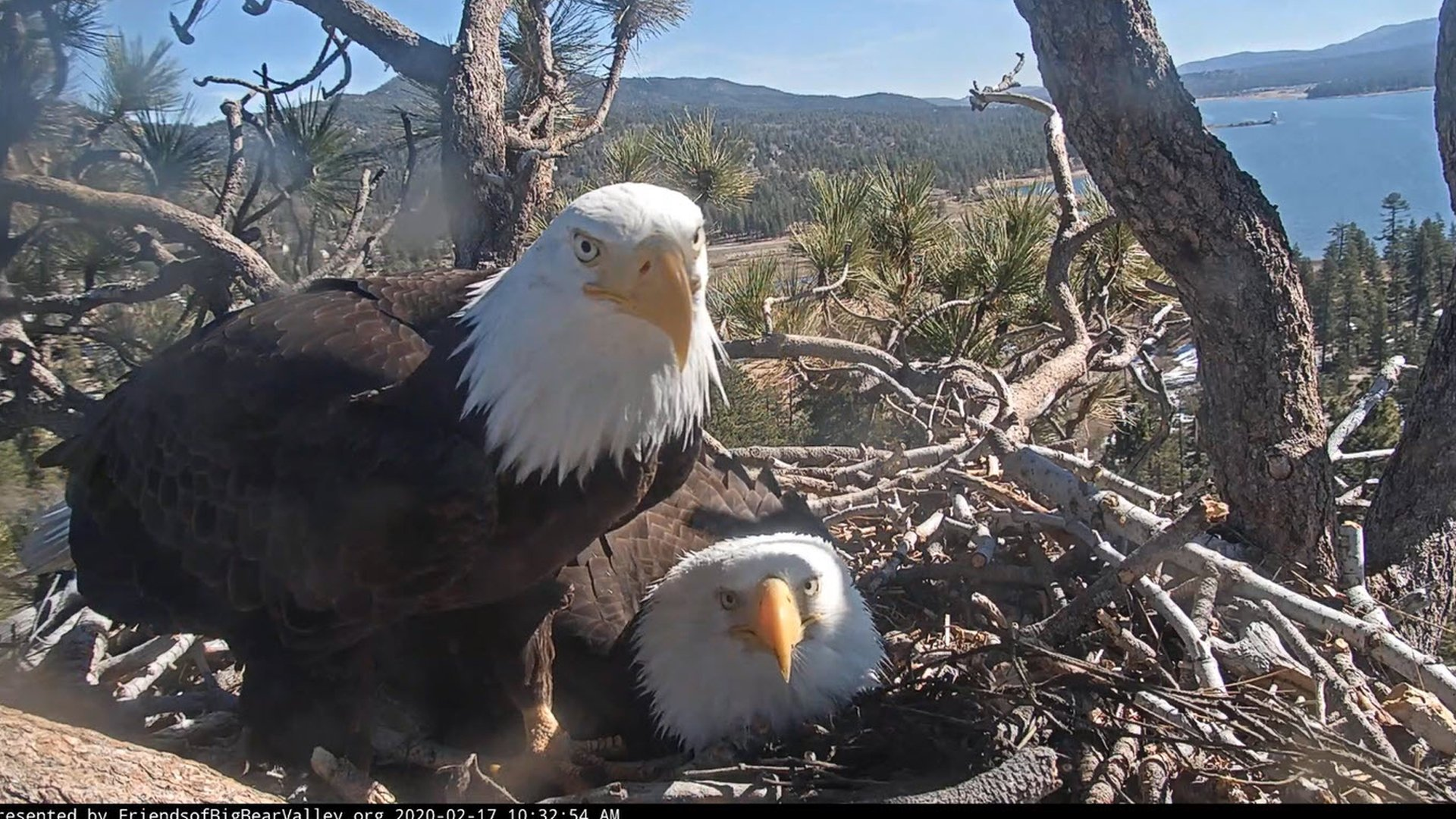 Jackie and Shadow are seen in a photo distributed by the U.S. Forest Service.