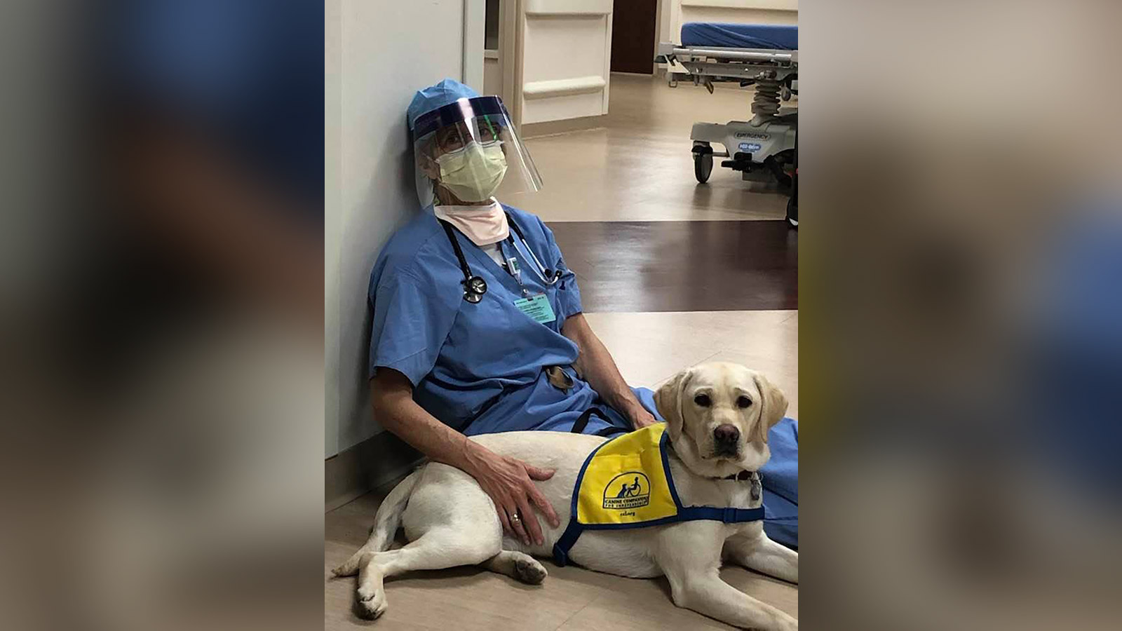 A future service dog brings comfort to ER doctors on the frontlines. (Susan Ryan and Wynn.)