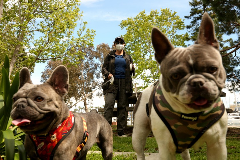 Nilou Zonozi wears a mask to walk her French bulldogs Ruby, left, and Hansel on April 8 at Burton Chase Park in Marina del Rey.(Genaro Molina / Los Angeles Times)