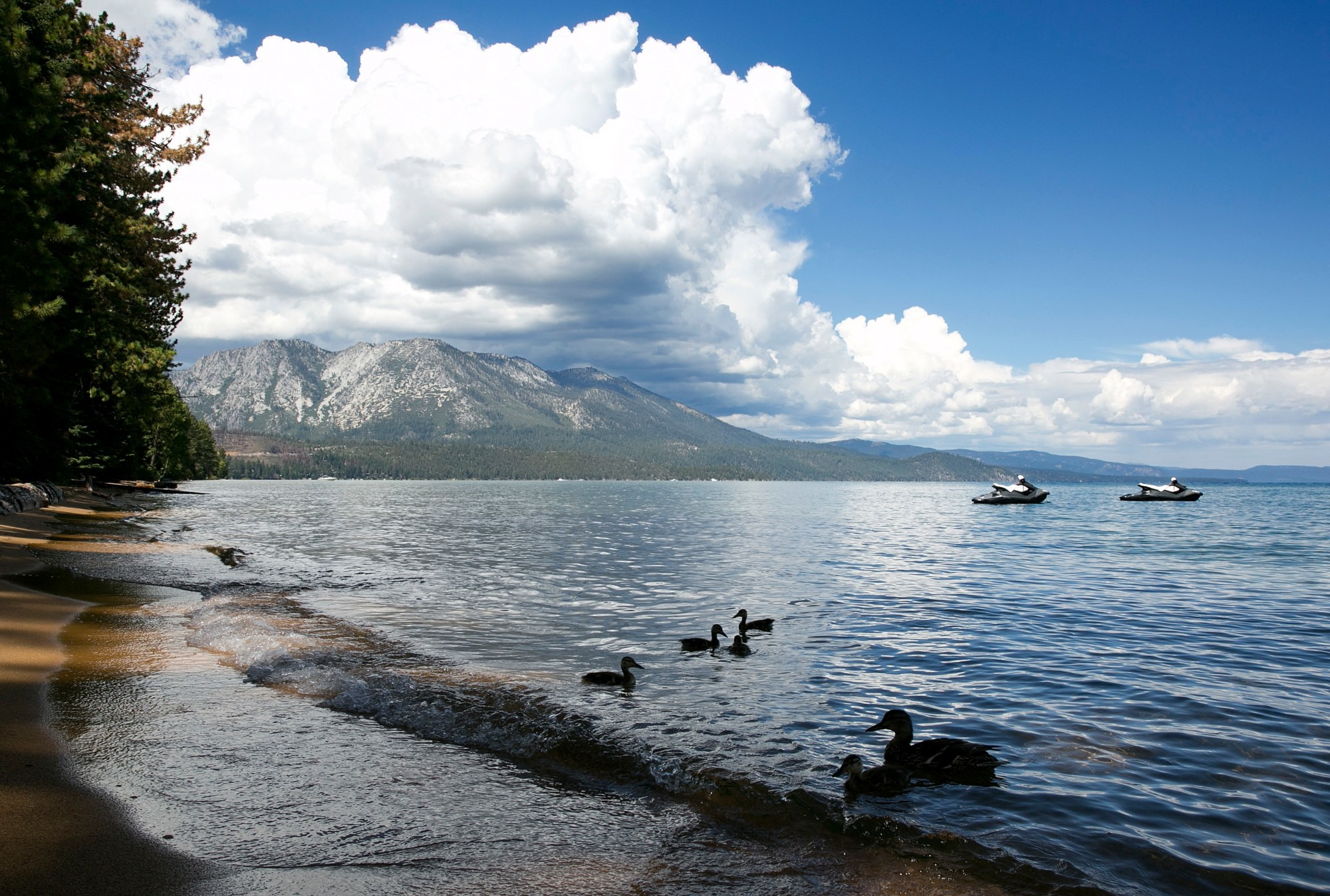 A family of ducks swims along the shore of South Lake Tahoe on Aug. 22, 2017. (Rich Pedroncelli/Associated Press)