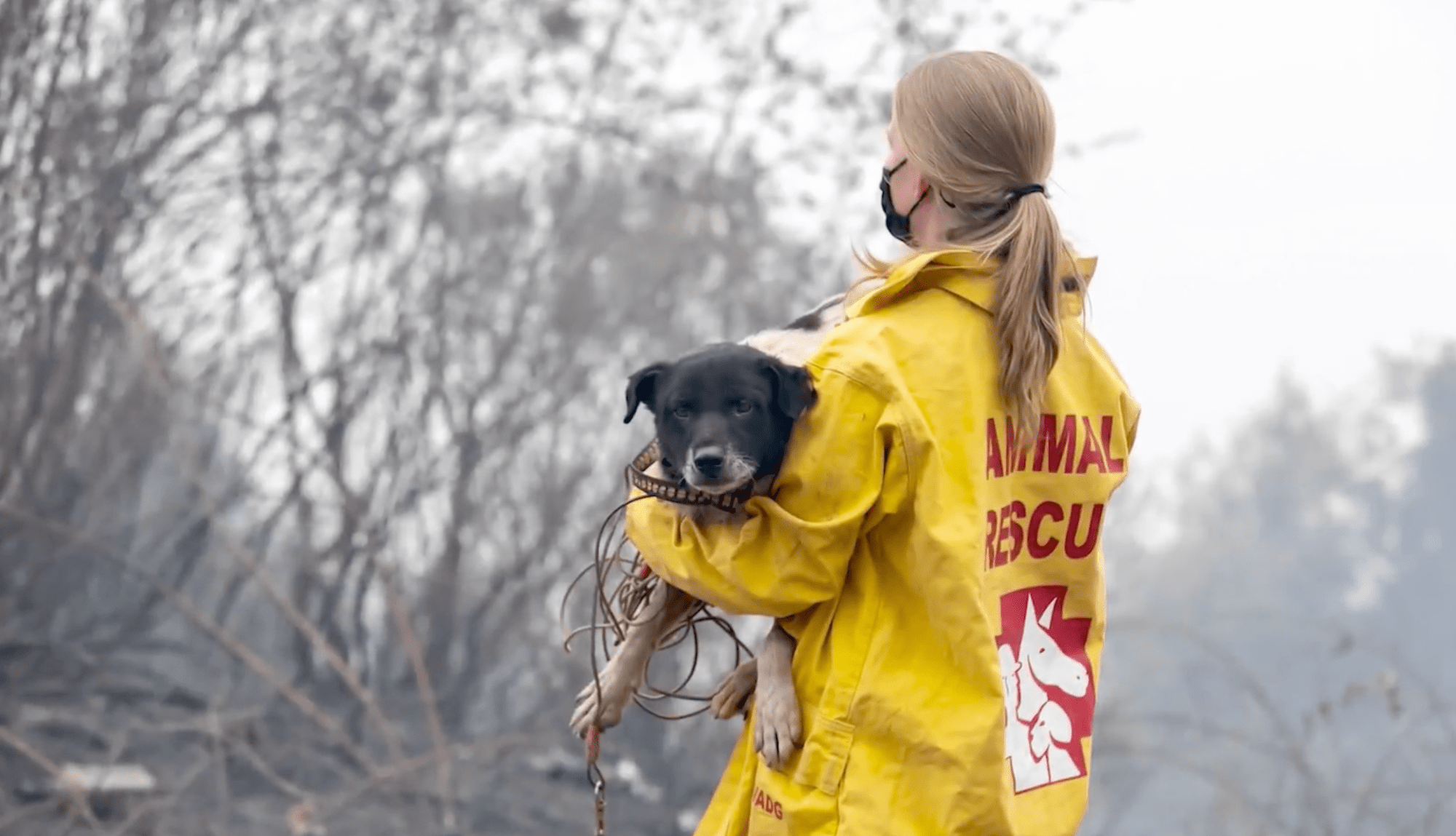 A dog is rescued from a wildfire in this undated photo. (IFAW via NewsNation)