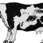 गाई काटेको अभियोगमा सिरहामा २ जना पक्राउ