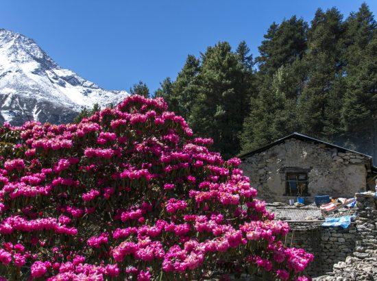 Everest Base Camp Trek 13 Days From Kathmandu