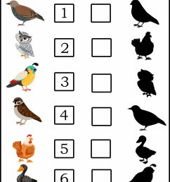 Match The Bird Shadow 3 - Kto5Education: Free Lesson Resources for  Pre-to-Class 5 [ 2560 x 1810 Pixel ]