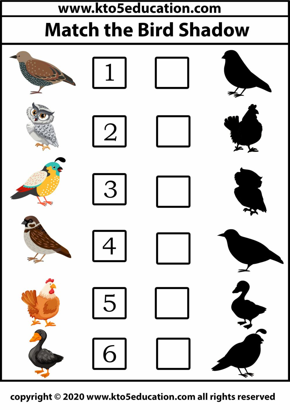 medium resolution of Match The Bird Shadow 3 - Kto5Education: Free Lesson Resources for  Pre-to-Class 5