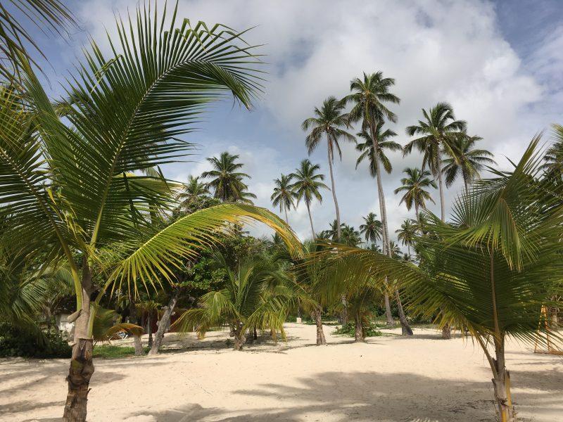 Na Dominikanie nie brakuje palm, również na plaży.