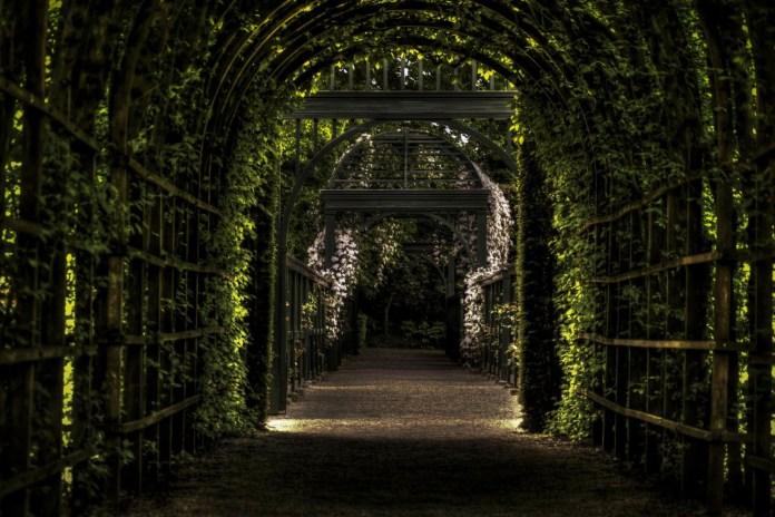 Blog, czyli ogród mojej pasji