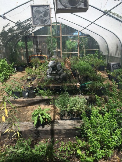 Nature Center's Native Plants Sale