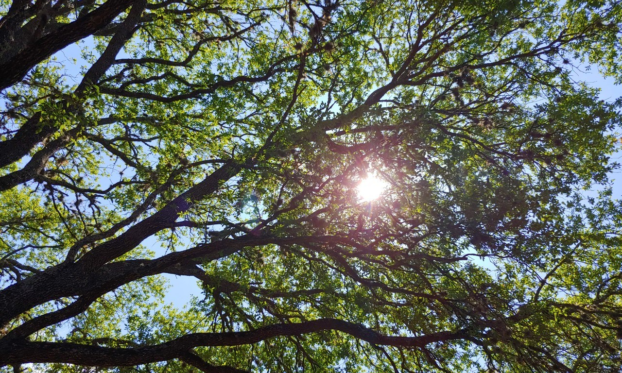 Sunlight coming through the branches of a tree.