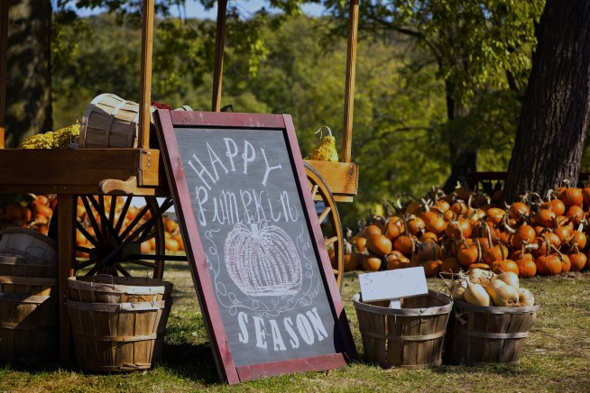 Image of a pumpkin patch with a chalkboard sign and baskets of pumpkins.