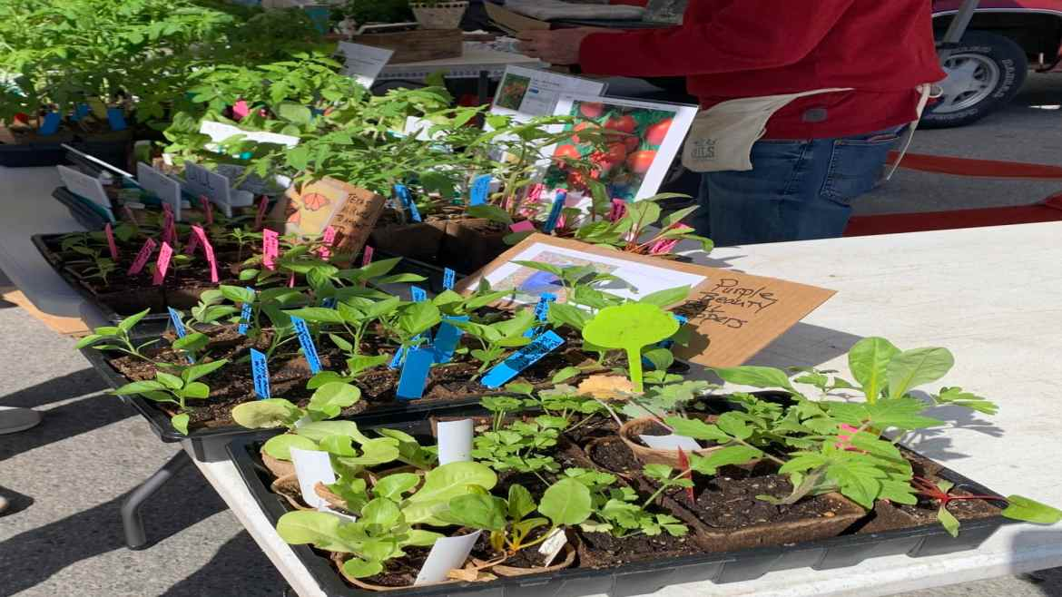 a picture of plants for sale at the farmers' market