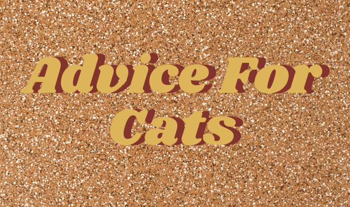 Advice for cats writing in maroon on a sparkly gold background