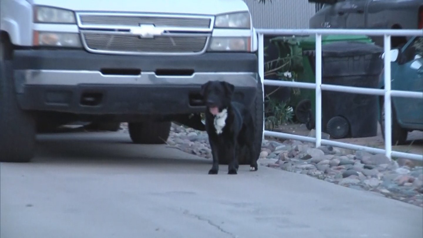 Dog slows traffic on Superstition Freeway in Mesa  3TV