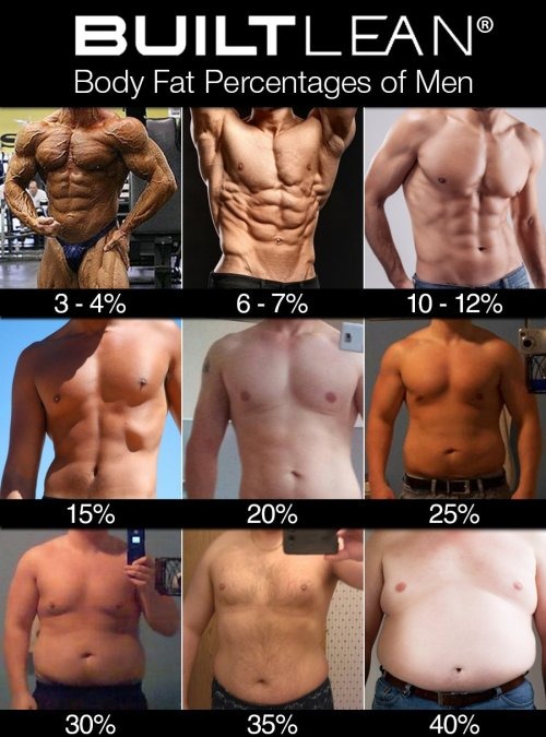 small resolution of 3 4 body fat ridiculously lean many bodybuilders drop to a body fat percentage of about 3 4 when they are preparing for competitions