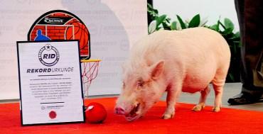RID-Rekord-Basketball-Schwein1