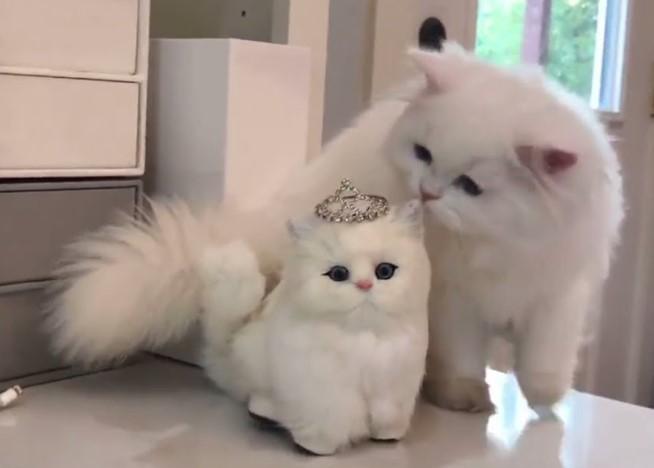 Kumpulan Hewan Hewan Lucu Unik Kucing Lucu Dan Imut Banget