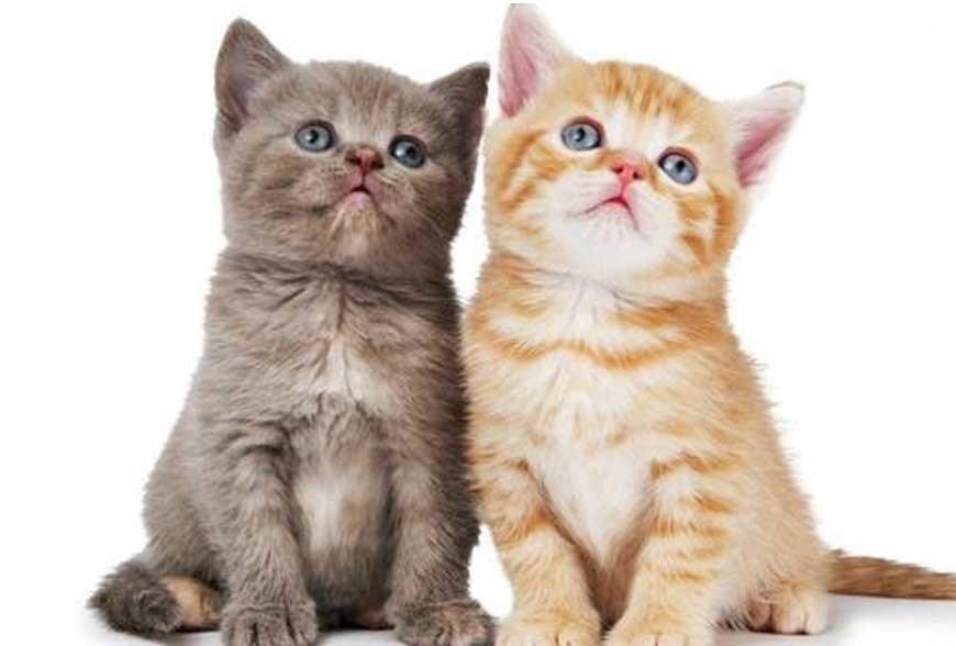 Gambar Kucing Imut Imut