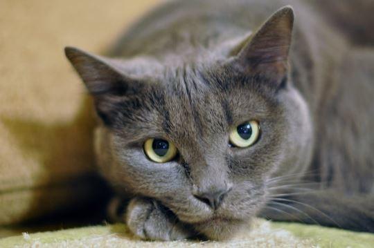 5 Suara Kucing Yang Gemesin Wajib Kamu Dengerin