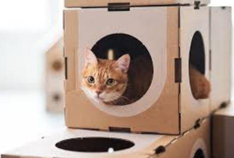 Cara Membuat Rumah Kucing Dari Kardus