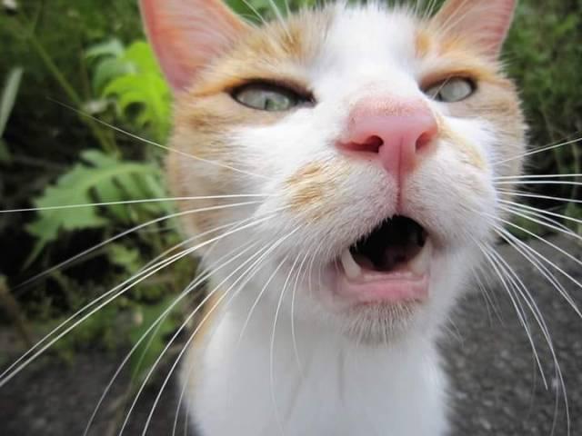 13 Wajah Kucing Lucu Bikin Ketawa Terbahak-bahak