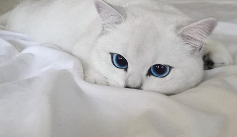 30 Kumpulan Gambar Kucing Comel Banget