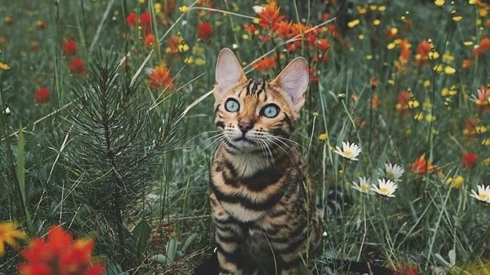 100 Kumpulan Gambar Kucing Cantik dan Imut-Imut