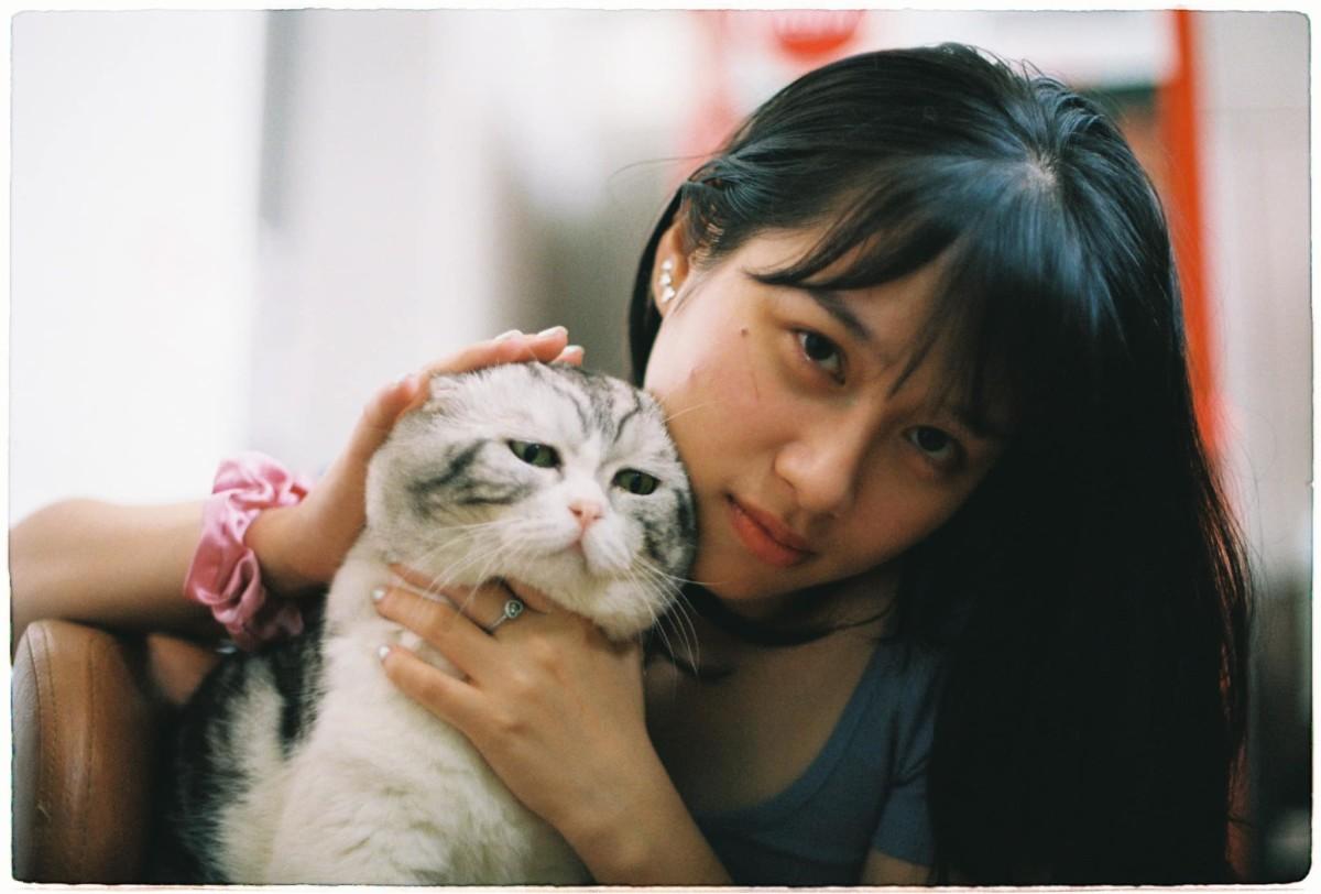 100 Gambar Kucing Lucu Ban Bikin Ketawa Kucing