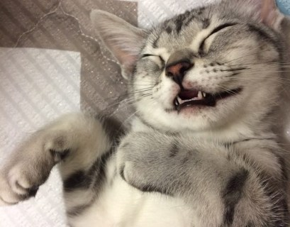 100 Gambar Kucing Lucu Banget Bikin Ketawa