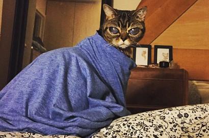 "wpid kucing lucu matilda.jpg - Kucing Lucu ini Dijuluki ""kucing Alien"""