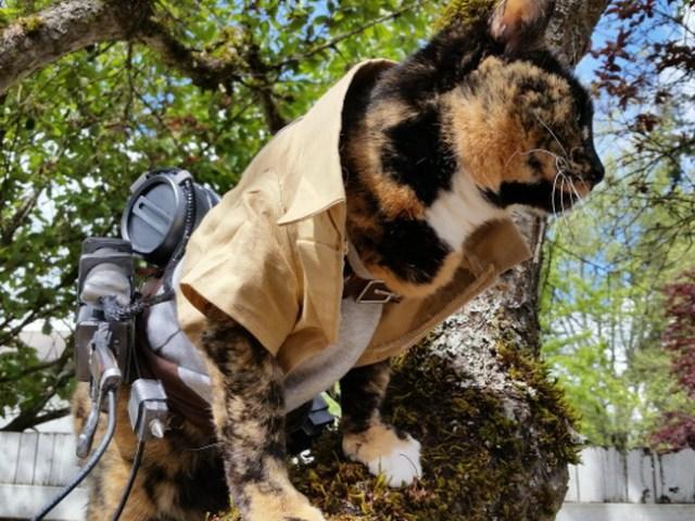wpid kucinglucu ereneko5.jpg - Ereneko, Kucing Lucu Tukang Cosplay