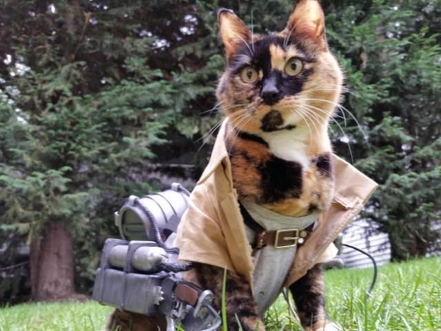 wpid kucinglucu ereneko6.jpg3 - Ereneko, Kucing Lucu Tukang Cosplay