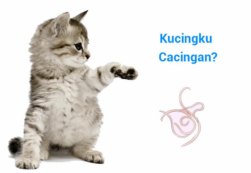 Terbukti Penyebab Ciriciri dan Cara Mengobati Kucing