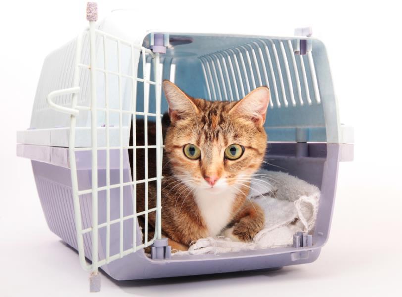 Daftar Harga Kandang Kucing Semua Ras September 2019