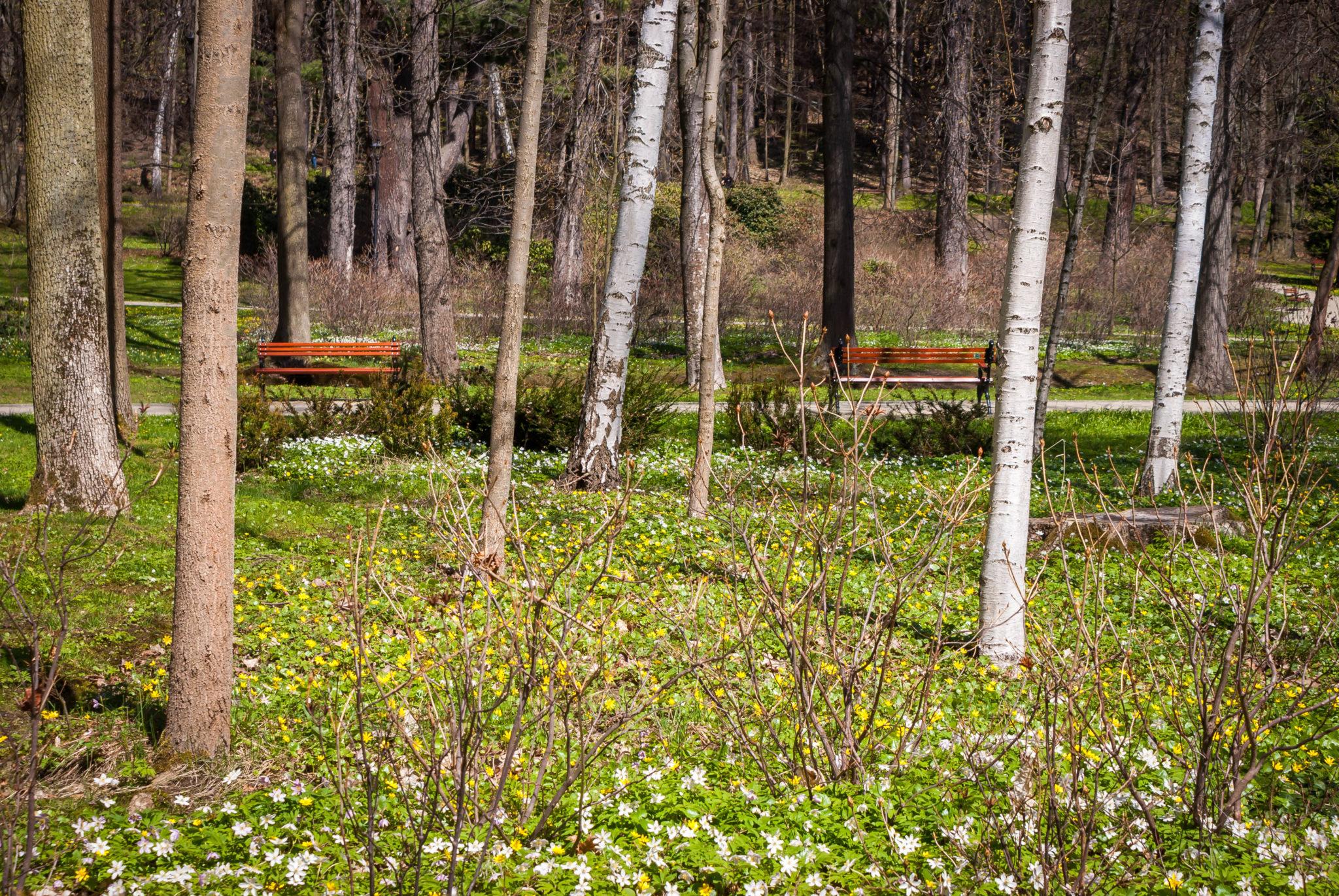 Kudowa Zdrój Wiosna