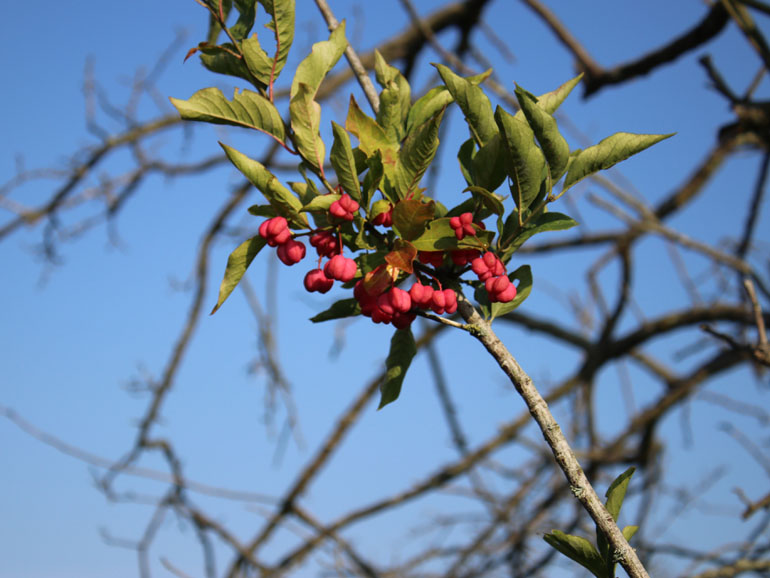Brenner Moor Früchte
