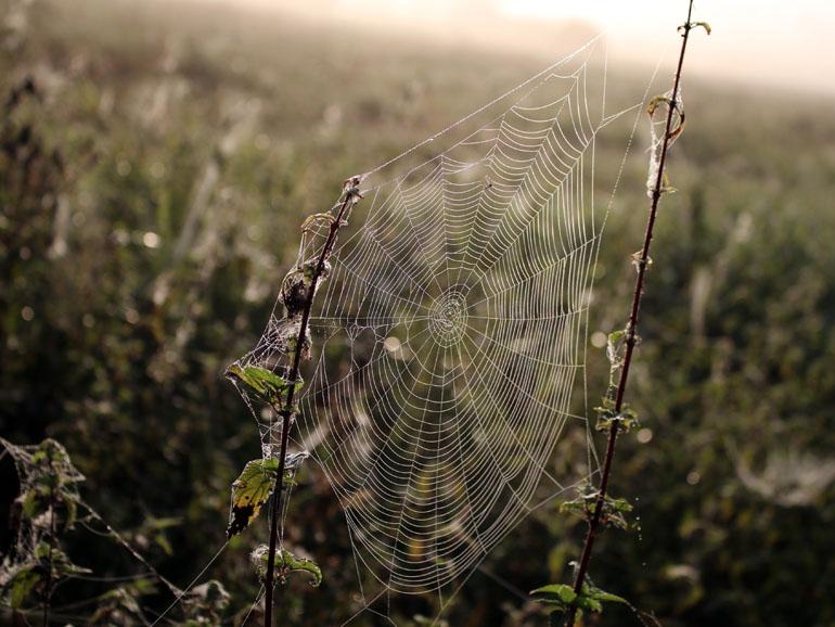 Brenner Moor Spinnennetz