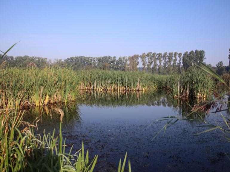 Brenner Moor Teich