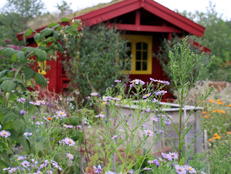 Trappenkamp Hütte Schmetterlingsgarten
