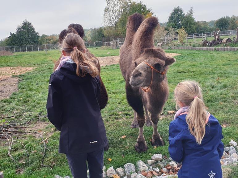Tierpark Krüzen Kamele 2