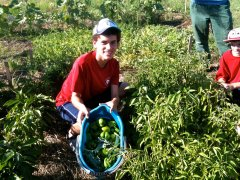 Justin Reis-Henrie of Boy Scout Troop 257 helped harvest in the community garden summer of 2012.