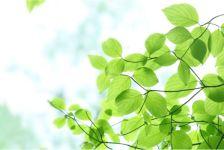 グリーンの効用について