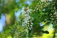 成長が早く丈夫な花木やコニファー