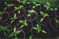 種まきガイド – 種まき編