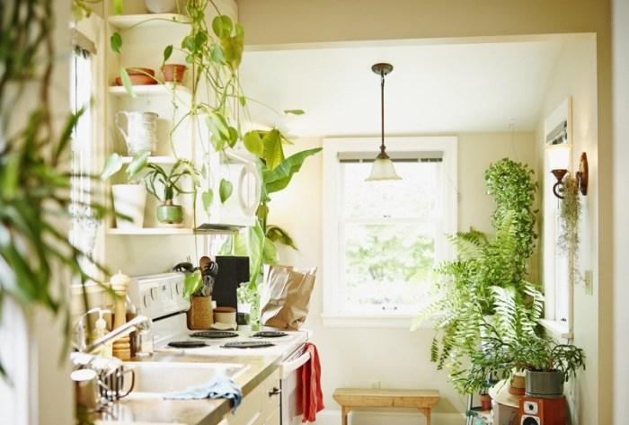 Растения на кухне