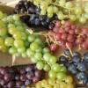 Grapes-blog