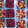 Kuhn-Orchards-Produce0830_085844